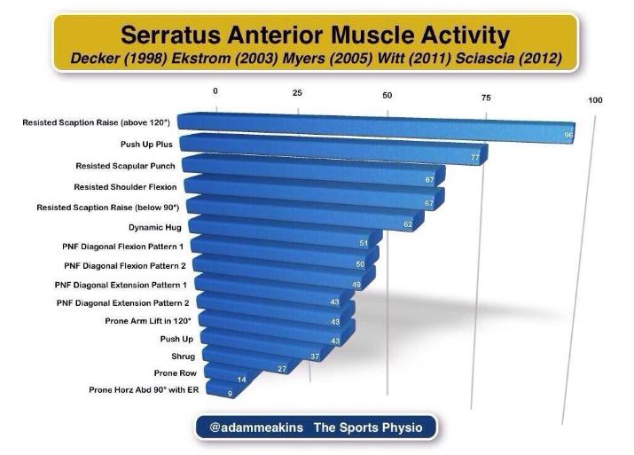 Serratus Anterior Muscle Activity