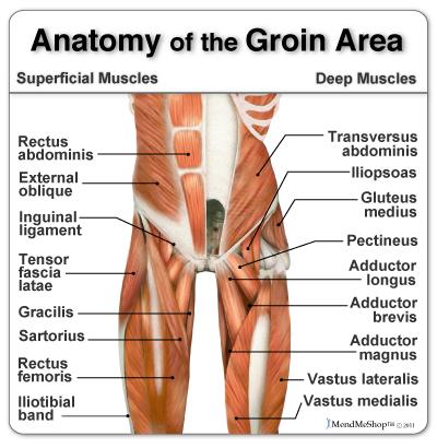GroinA